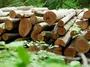 Beförsterung Ihres Waldbesitzes