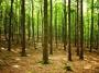 Waldbewertung - Waldwertschätzung
