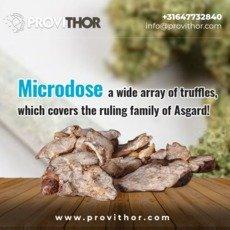 Microdosing - Magic Truffles